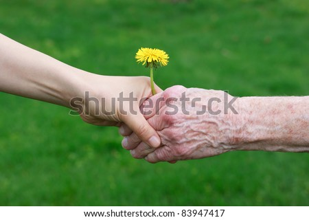 Young and senior's hand holding a dandelion - stock photo