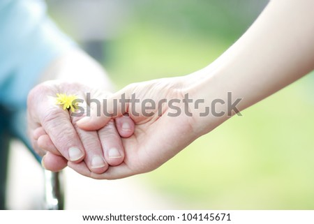 Young and seniors hands holding their hands with a yellow dandelion - stock photo