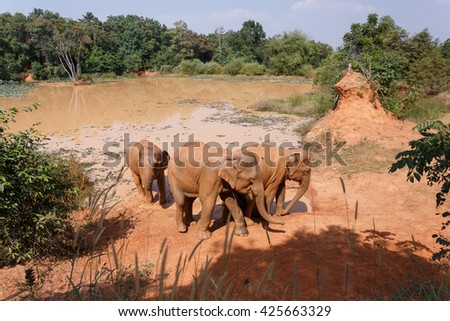 Young Asian elephants Play the salt marsh at  Village elephants in Thailand - stock photo