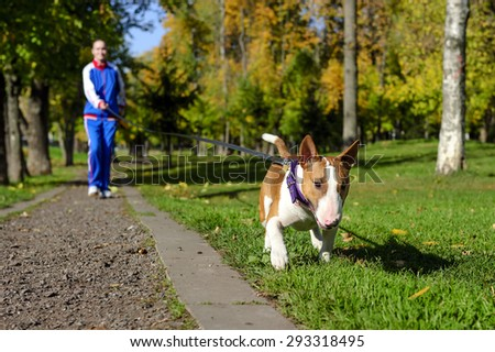 Young attractive sport girl jogging with dog on gravel path in sunny autumn park, bull terrier with collar and leash, selective focus  - stock photo