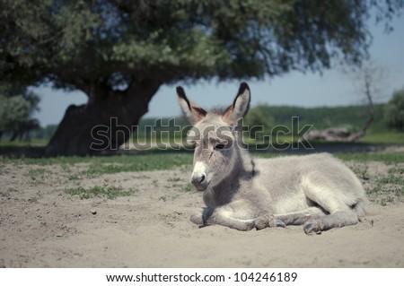 young baby donkey - stock photo