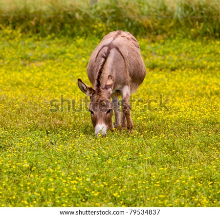 Young baby donkey in a meadow full of wildflowers - stock photo
