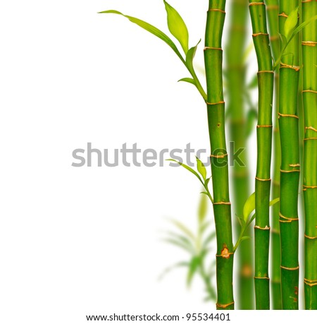 Young bamboo sprouts isolated on white background - stock photo