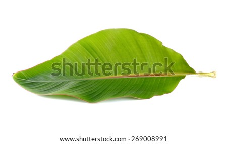 Young banana leaf on white background.