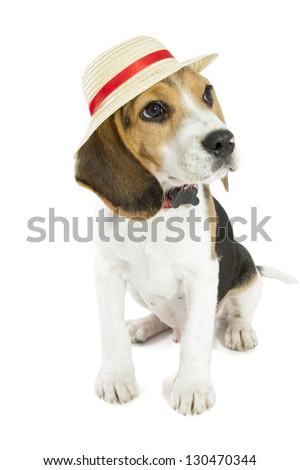 Young beagle with straw hat isolated over white