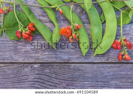 young beans plants with pods and flowers on rustic background