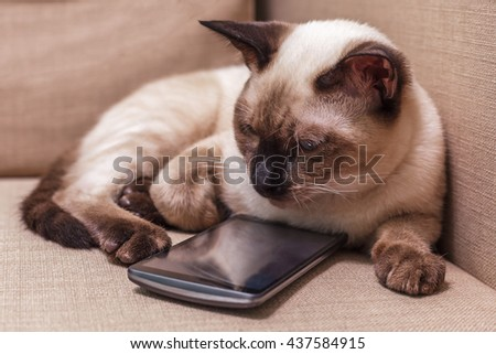 Young beautiful Thai cat lying on the couch and playing with a mobile phone. Pet selects an application for entertainment.