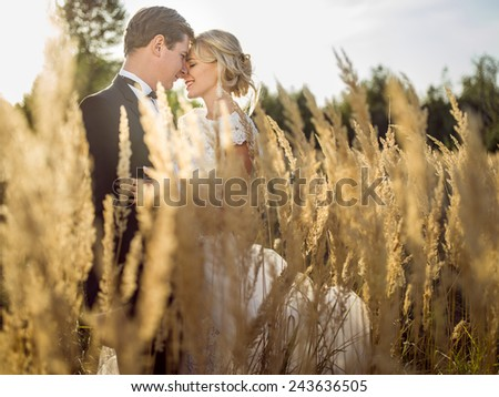 young beautiful wedding couple hugging in a field with grass eared. - stock photo