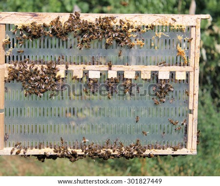 Young bees frame - stock photo
