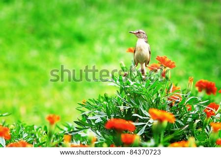 young bird in green garden - stock photo