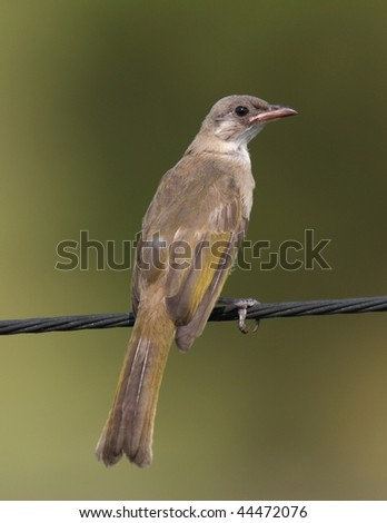 young bird on the wire - stock photo