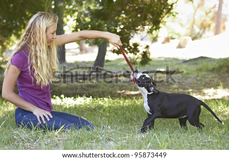 Young black and white Pit Bull puppy playing with blonde female adult - stock photo