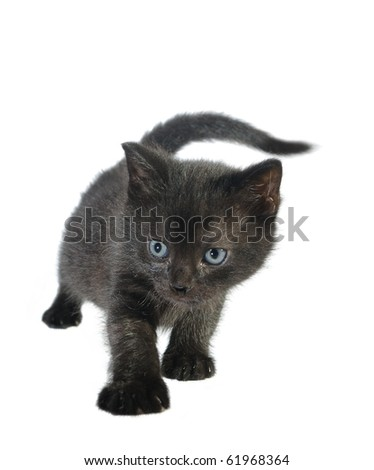 young black cat on white backgound - stock photo