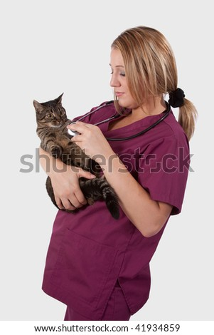Young blond woman vet wearing medical uniform scrubs holding and examining an adult tabby cat - stock photo