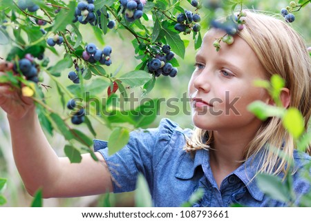 Young Blonde Girl Picking Blueberries in a Blue Dress - stock photo