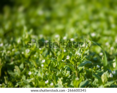 Young blooming in spring grass as background - stock photo