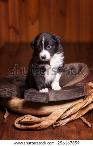 Young border collie puppy became front paws on the old clamp - stock photo