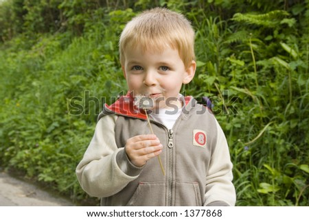 Young boy blowing the tiny parachute seeds from dandelion flower. - stock photo