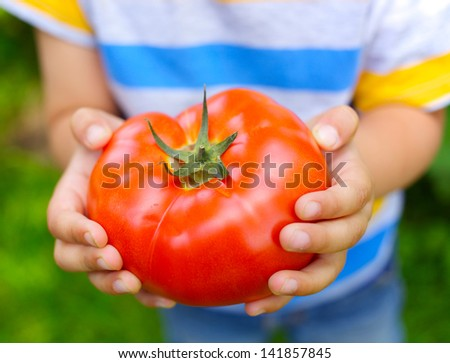 Young boy hand holding organic green natural healthy food produce tomatoes - stock photo