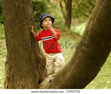 """Young boy in """"Y"""" of tree, contemplating a higher climb. - stock photo"""