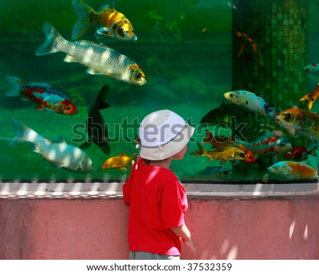 young boy looking at fishes in big aquarium - stock photo