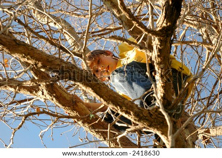 Young boys hides up in a  tree - stock photo
