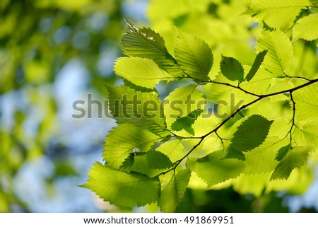 Young branch of birch on blurred blue and green background