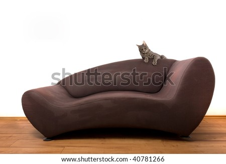 young brindle cat playing on sofa, part 1 - stock photo