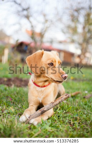 Young brown mix-dog playing with piece of branch and enjoying nice autumn time at huge garden (color toned image)