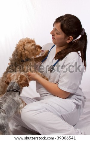 Young brunette hispanic woman wearing white scrubs and stethoscope sitting on the floor with two yorkshire terrier dogs - stock photo