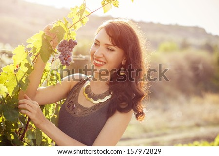 Young brunette woman harvesting grapes under sunset light - stock photo