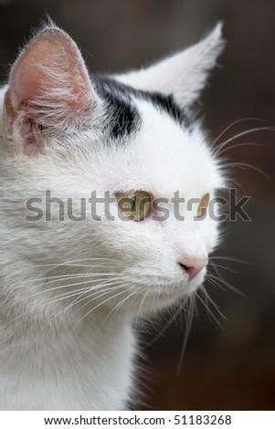 Young cat close-up shoot - stock photo