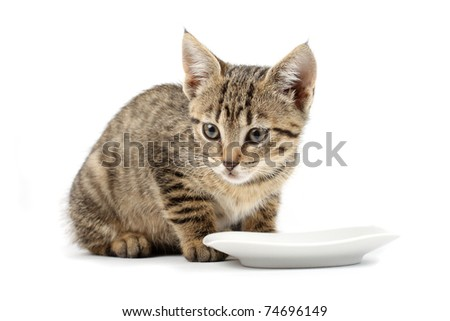 Young cat eating, cat with food cup, white background - stock photo