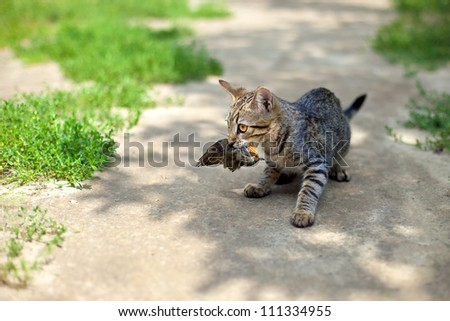 Young cat hunted a bird - stock photo