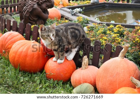 young cat in a garden in autumn