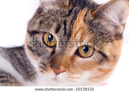 Young cat isolated on a white background