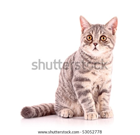 Young cat isolated on white