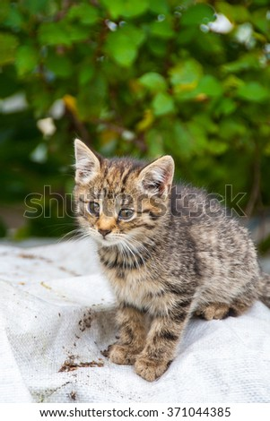 young cat looking curious