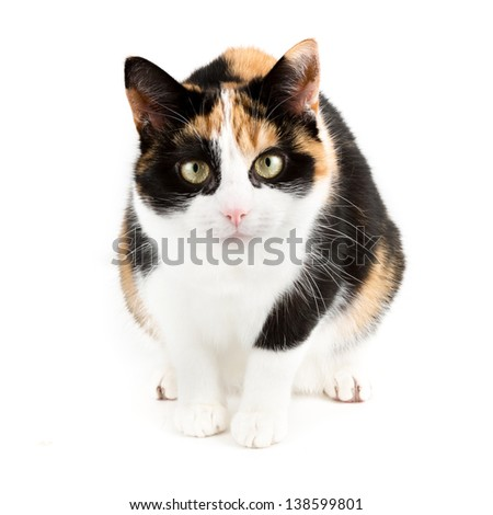 Young cat looking curious into the camera, isolated in white - stock photo