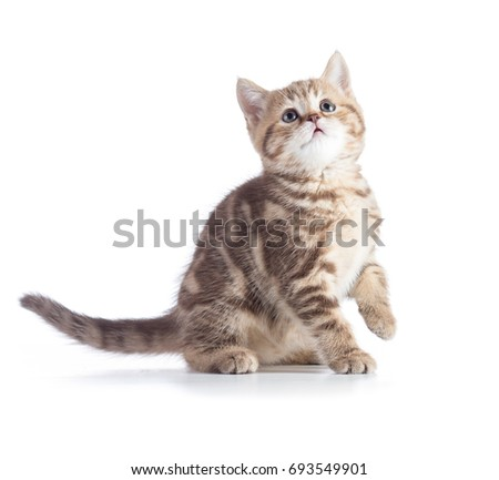 young cat looking up isolated