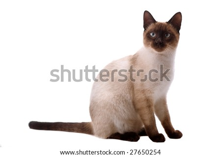 young cat looking up. On a white background - stock photo