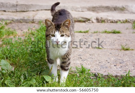 Young cat on the grass in village - stock photo
