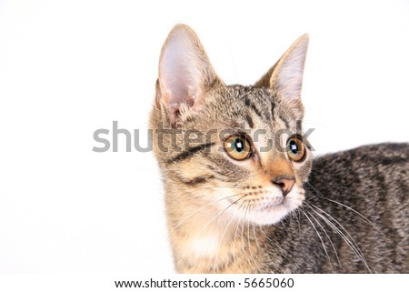 Young cat on white looking right - stock photo