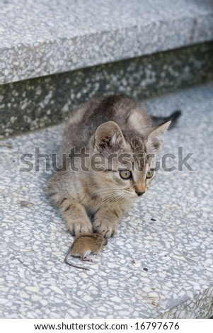 young cat playing with a little mouse - stock photo