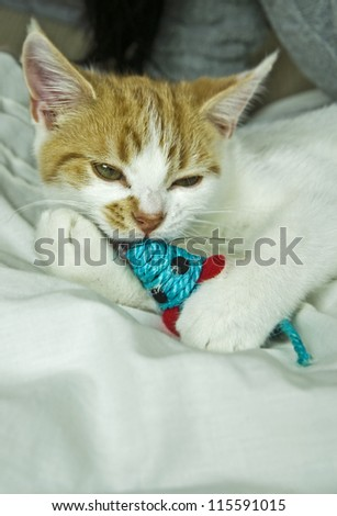 young cat playing with toy mouse on bed - stock photo