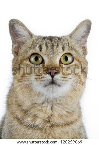 Young cat portrait on white background - stock photo