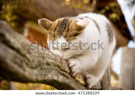Young cat sharpening its claws on the fence in autumn
