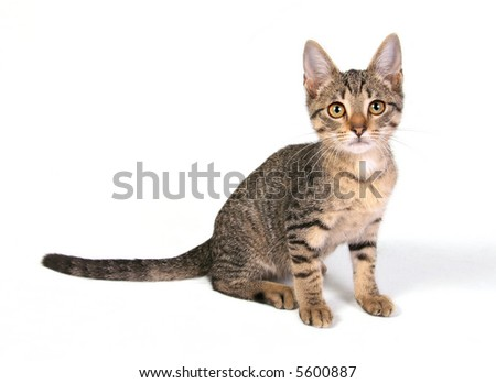 Young cat sitting on white background - stock photo