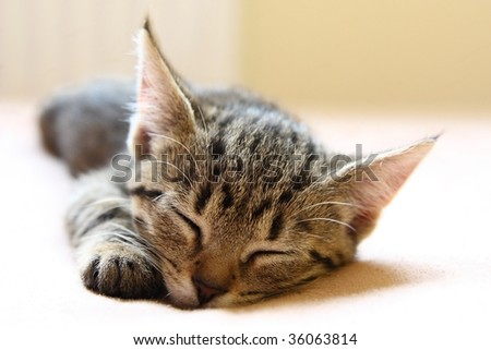 Young cat sleeping on the bed - stock photo