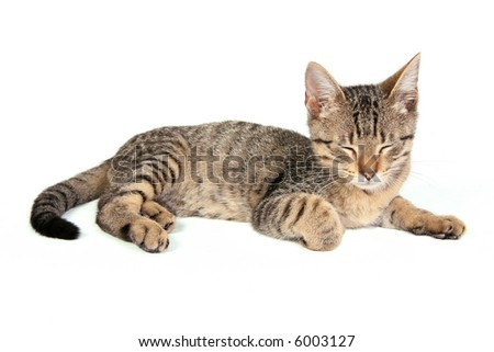 Young cat sleeping on white - stock photo